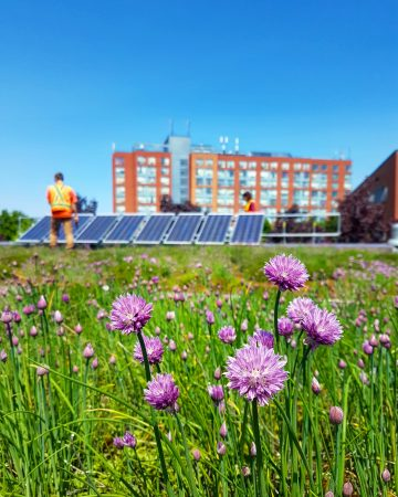 Integrating Green Roof And Photovoltaic Systems Ginkgo