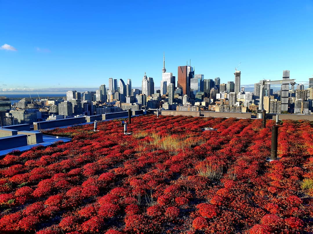 2018 Year In Review Ginkgo Sustainability Green Roofs